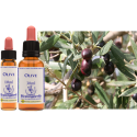 OLIVE , OLIVO , 10 ML, FLORES DE BACH, HEALING HERBS