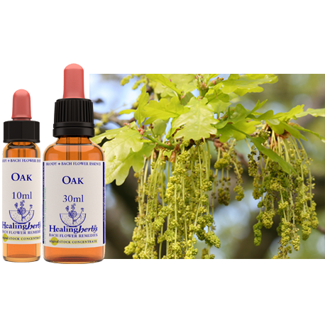 OAK, ROBLE, 10 ML, FLORES DE BACH, HEALING HERBS